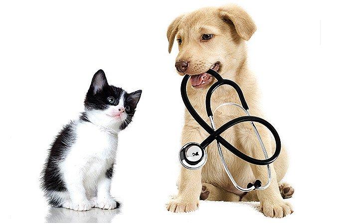 veterinaria randagismo