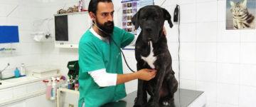 Calogero Piscopo con il cane Ettore