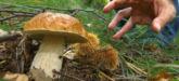 Simbolo funghi