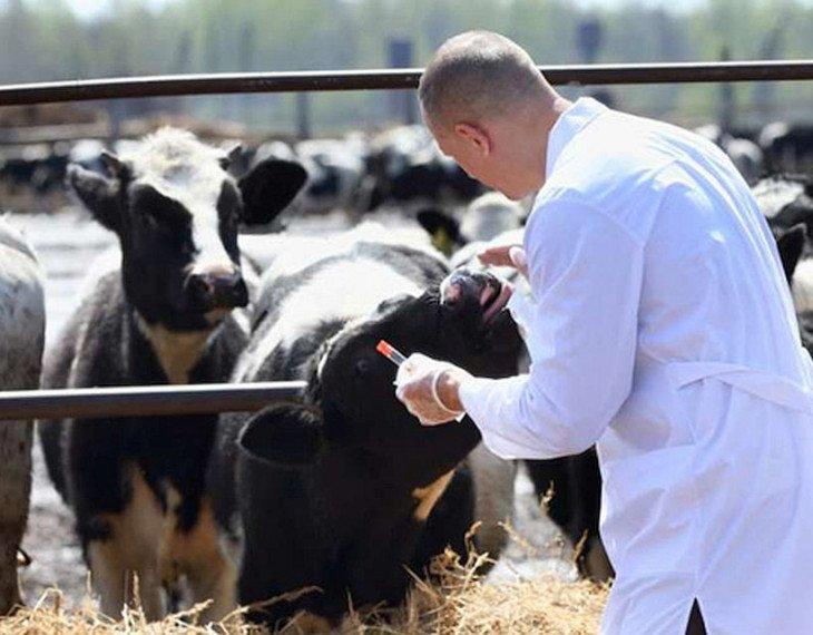 sanità animale