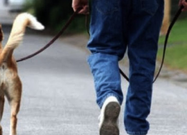 Animali a passeggio
